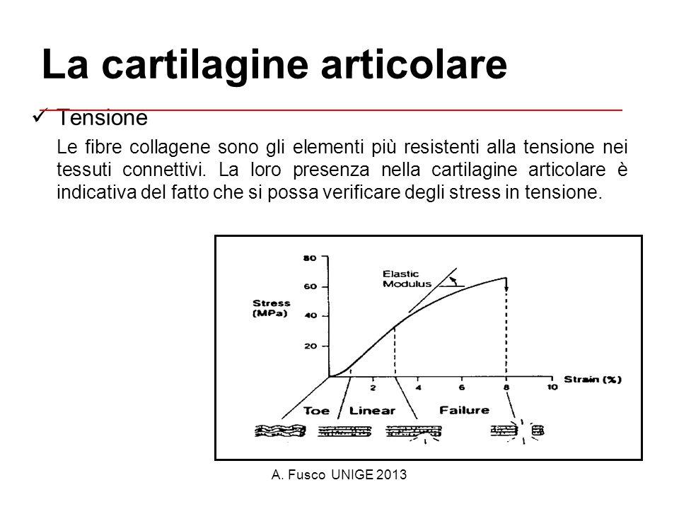 A. Fusco UNIGE 2013 La cartilagine articolare Tensione Le fibre collagene sono gli elementi più resistenti alla tensione nei tessuti connettivi. La lo