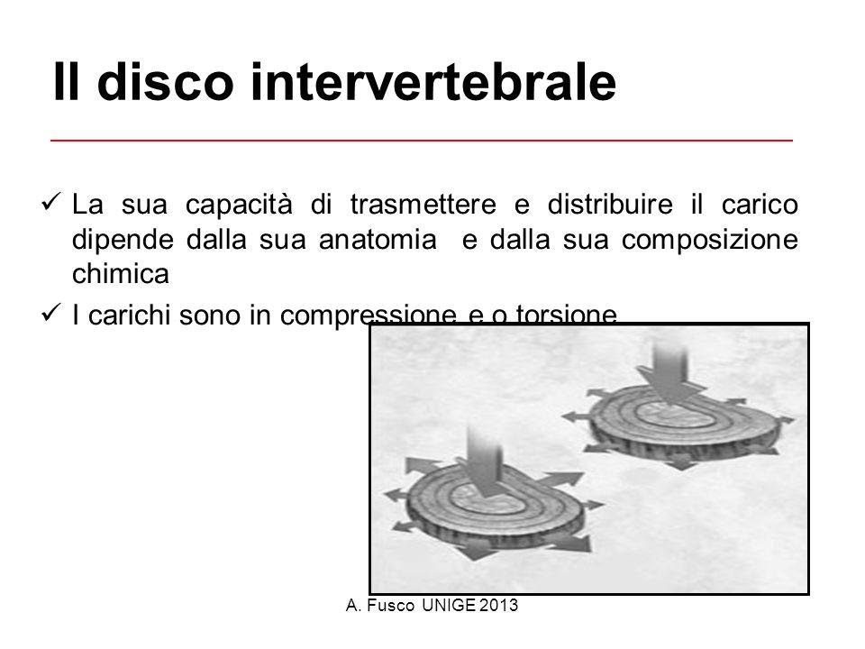 A. Fusco UNIGE 2013 Il disco intervertebrale La sua capacità di trasmettere e distribuire il carico dipende dalla sua anatomia e dalla sua composizion