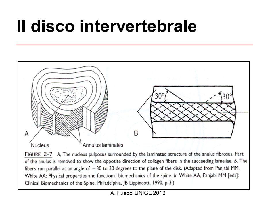 A. Fusco UNIGE 2013 Il disco intervertebrale