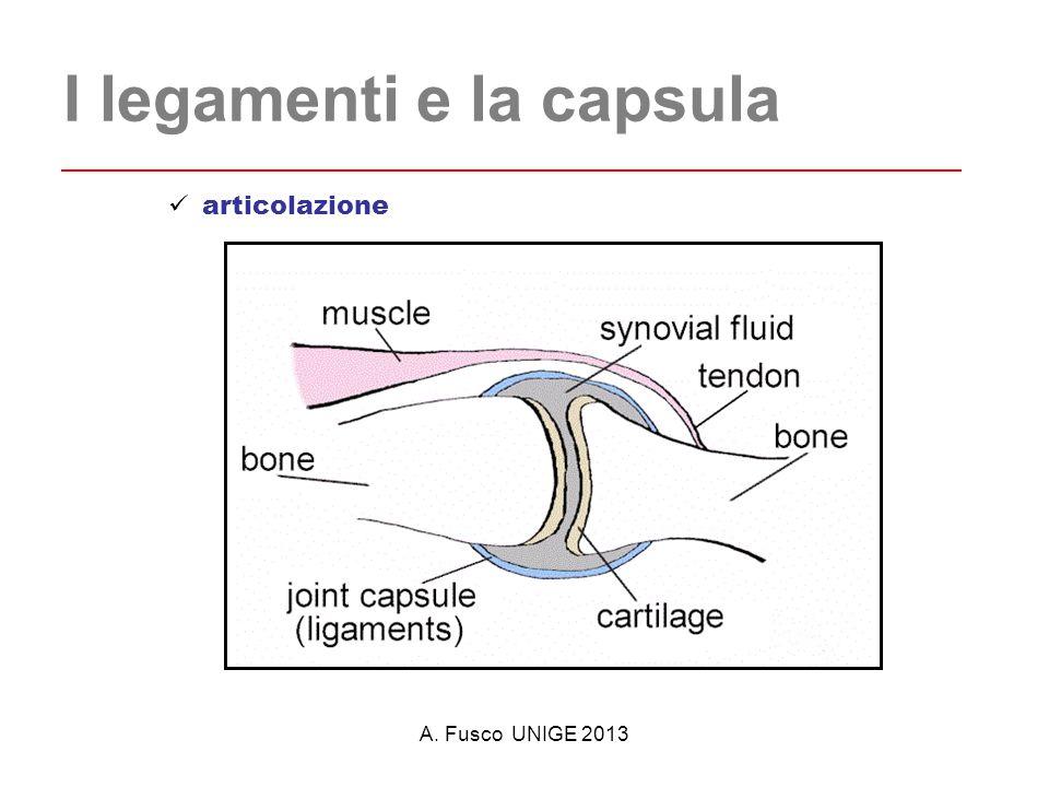 A. Fusco UNIGE 2013 I legamenti e la capsula articolazione