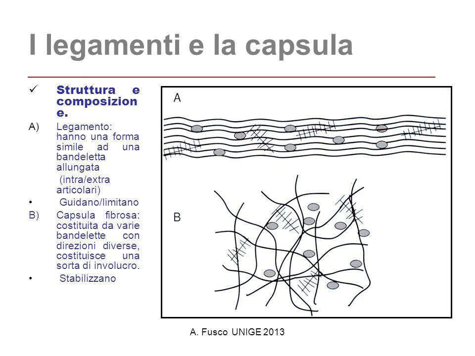 A.Fusco UNIGE 2013 I legamenti e la capsula Struttura e composizion e.