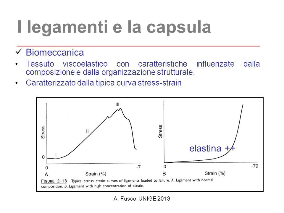 A. Fusco UNIGE 2013 I legamenti e la capsula Biomeccanica Tessuto viscoelastico con caratteristiche influenzate dalla composizione e dalla organizzazi