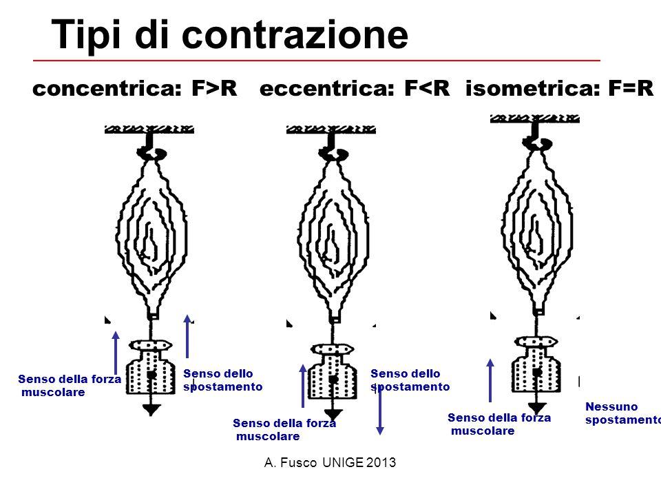 A. Fusco UNIGE 2013 Tipi di contrazione concentrica: F>R eccentrica: F<R isometrica: F=R Senso della forza muscolare Senso dello spostamento Senso del