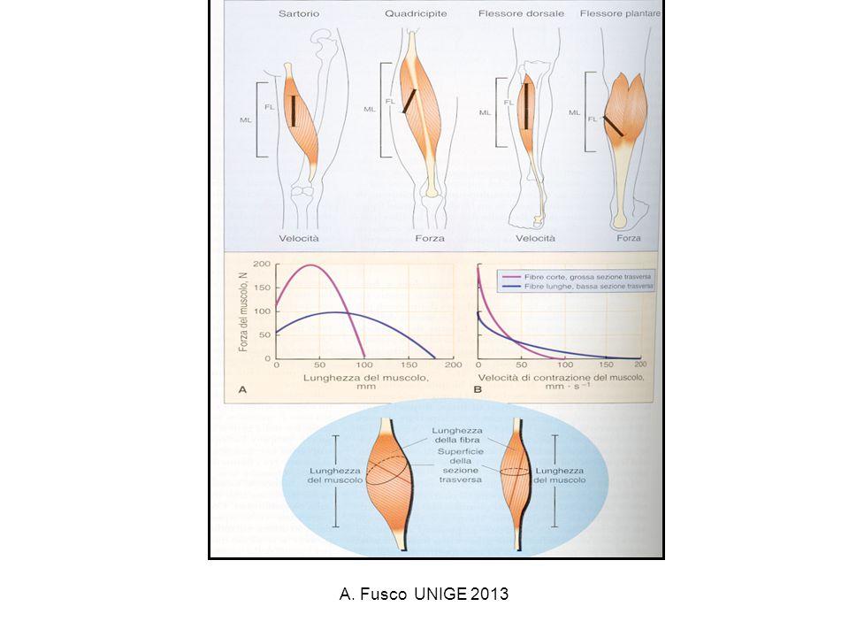 A. Fusco UNIGE 2013