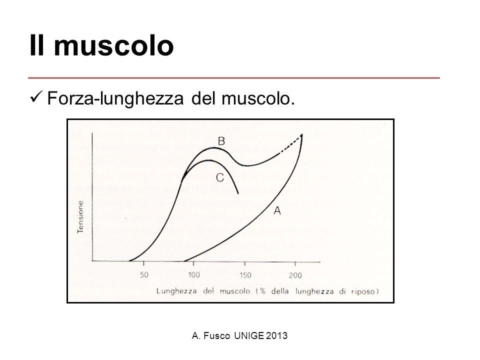 Il muscolo Forza-lunghezza del muscolo.