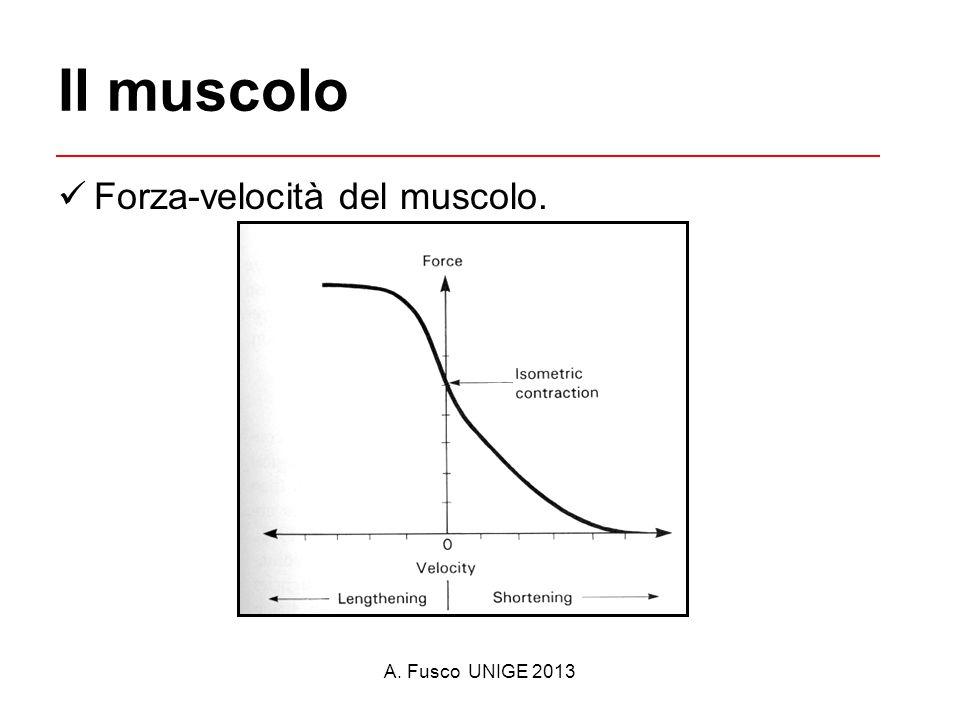 A. Fusco UNIGE 2013 Il muscolo Forza-velocità del muscolo.