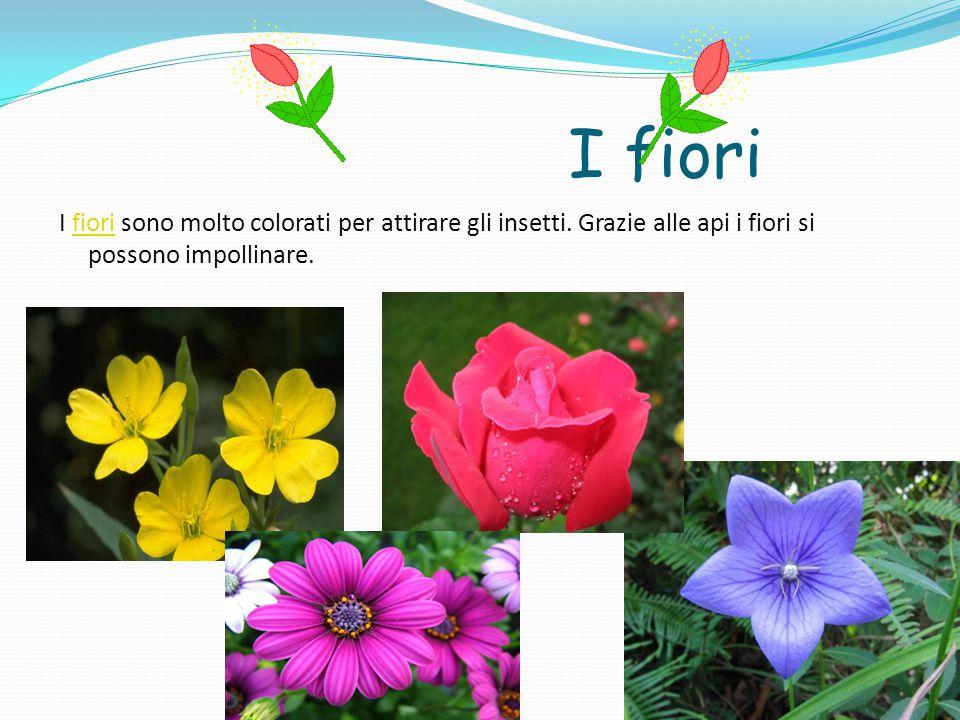I fiori I fiori sono molto colorati per attirare gli insetti. Grazie alle api i fiori si possono impollinare.fiori