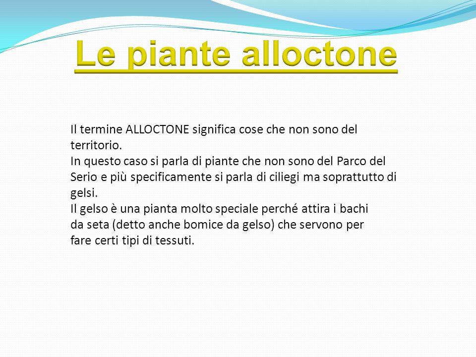 Il termine ALLOCTONE significa cose che non sono del territorio. In questo caso si parla di piante che non sono del Parco del Serio e più specificamen