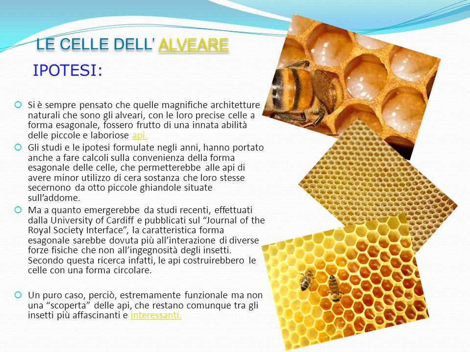  Si è sempre pensato che quelle magnifiche architetture naturali che sono gli alveari, con le loro precise celle a forma esagonale, fossero frutto di una innata abilità delle piccole e laboriose api.api.