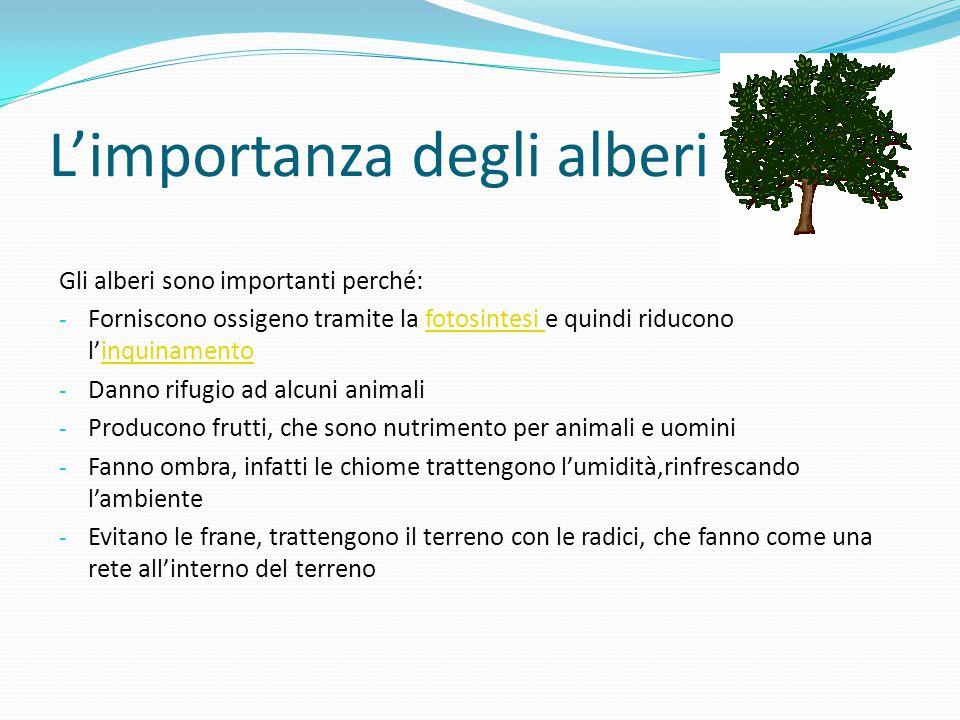 L'importanza degli alberi Gli alberi sono importanti perché: - Forniscono ossigeno tramite la fotosintesi e quindi riducono l'inquinamentofotosintesi inquinamento - Danno rifugio ad alcuni animali - Producono frutti, che sono nutrimento per animali e uomini - Fanno ombra, infatti le chiome trattengono l'umidità,rinfrescando l'ambiente - Evitano le frane, trattengono il terreno con le radici, che fanno come una rete all'interno del terreno