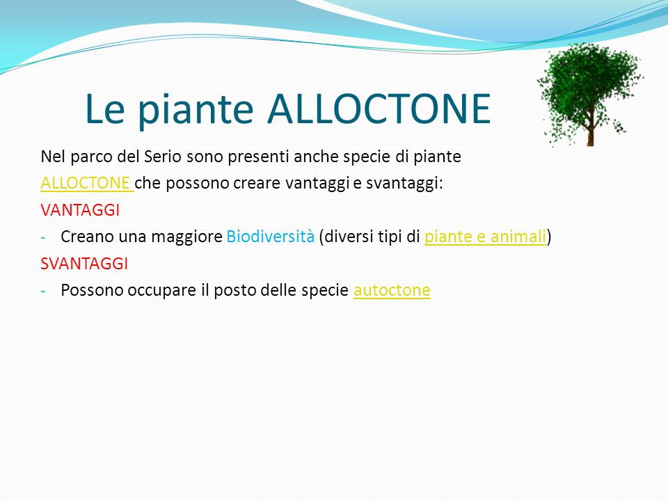 Le piante ALLOCTONE Nel parco del Serio sono presenti anche specie di piante ALLOCTONE ALLOCTONE che possono creare vantaggi e svantaggi: VANTAGGI - Creano una maggiore Biodiversità (diversi tipi di piante e animali)piante e animali SVANTAGGI - Possono occupare il posto delle specie autoctoneautoctone