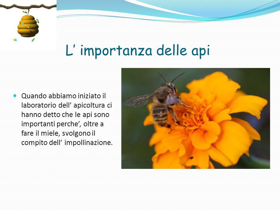 L' importanza delle api Quando abbiamo iniziato il laboratorio dell' apicoltura ci hanno detto che le api sono importanti perche', oltre a fare il miele, svolgono il compito dell' impollinazione.