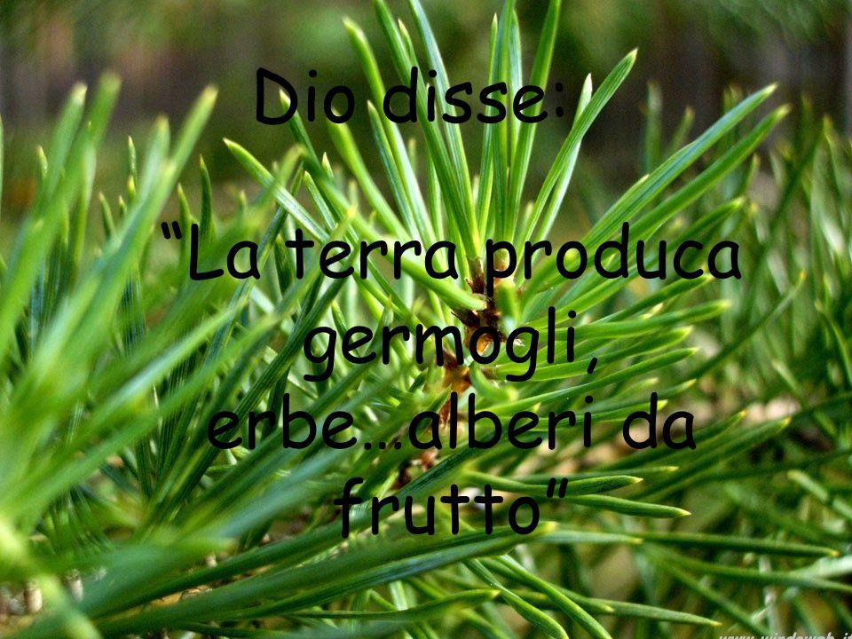 La terra produca germogli, erbe…alberi da frutto Dio disse: