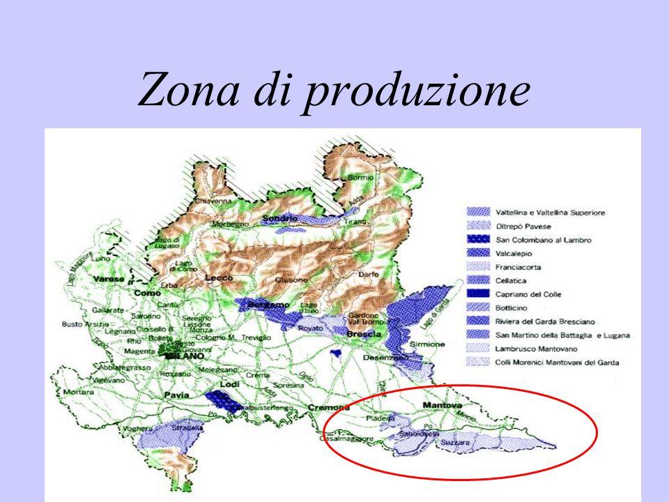 Zona di produzione