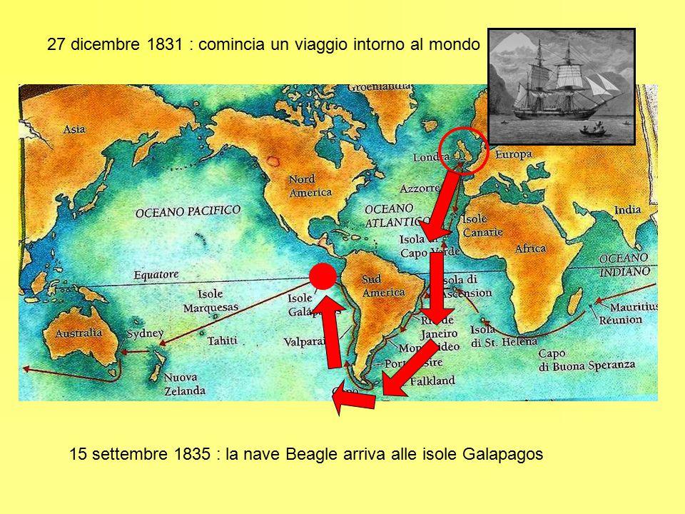 Isole Galapagos Charles Darwin ha 26 anni Osserva la natura Disegna gli animali e le piante Scrive un diario … Raccolsi ventisei specie di uccelli terrestri, tutti peculiari dell'arcipelago e assenti altrove… fra l'altro …tre specie di tordi beffeggiatori, una forma altamente caratteristica dell America.
