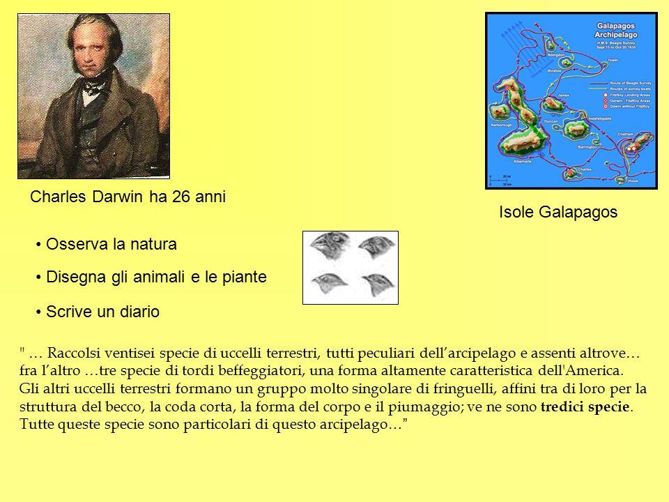 Isole Galapagos Charles Darwin ha 26 anni Osserva la natura Disegna gli animali e le piante Scrive un diario