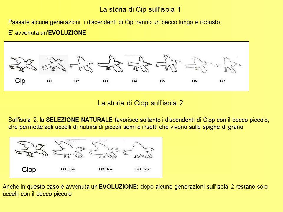 Anche i cambiamenti climatici possono influire sulla SELEZIONE NATURALE Peter e Rosemary Grant hanno visitato per molti anni le isole Galapagos e studiato i fringuelli di Darwin L'EVOLUZIONE di una SPECIE può essere accelerata da alcuni EVENTI CLIMATICI e AMBIENTALI e può anche cambiare direzione; per questo motivo la grande VARIABILITÀ DI INDIVIDUI della stessa specie diminuisce il pericolo di ESTINZIONE 1977 - Anno di grande siccità: La selezione favorì gli uccelli con il becco più lungo 1983 – Uragano El Niño : Gran parte della vegetazione andò distrutta; sopravvissero soprattutto gli uccelli col becco più corto