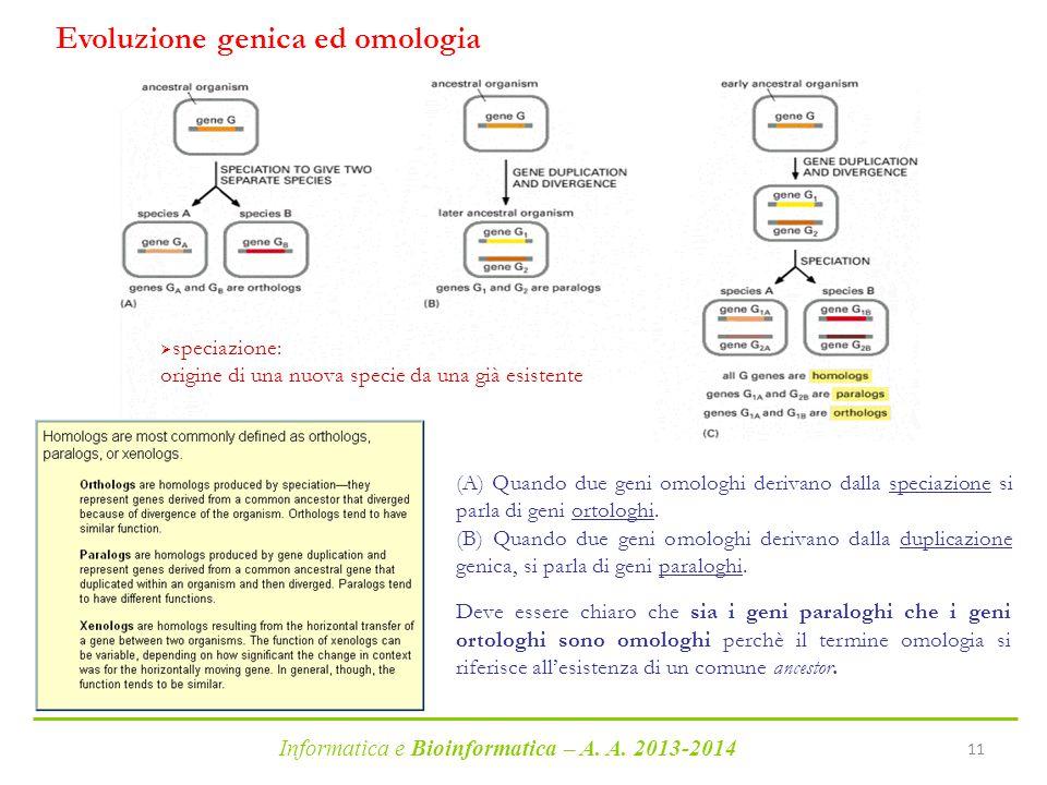 Informatica e Bioinformatica – A. A. 2013-2014 11  speciazione: origine di una nuova specie da una già esistente Evoluzione genica ed omologia (A) Qu