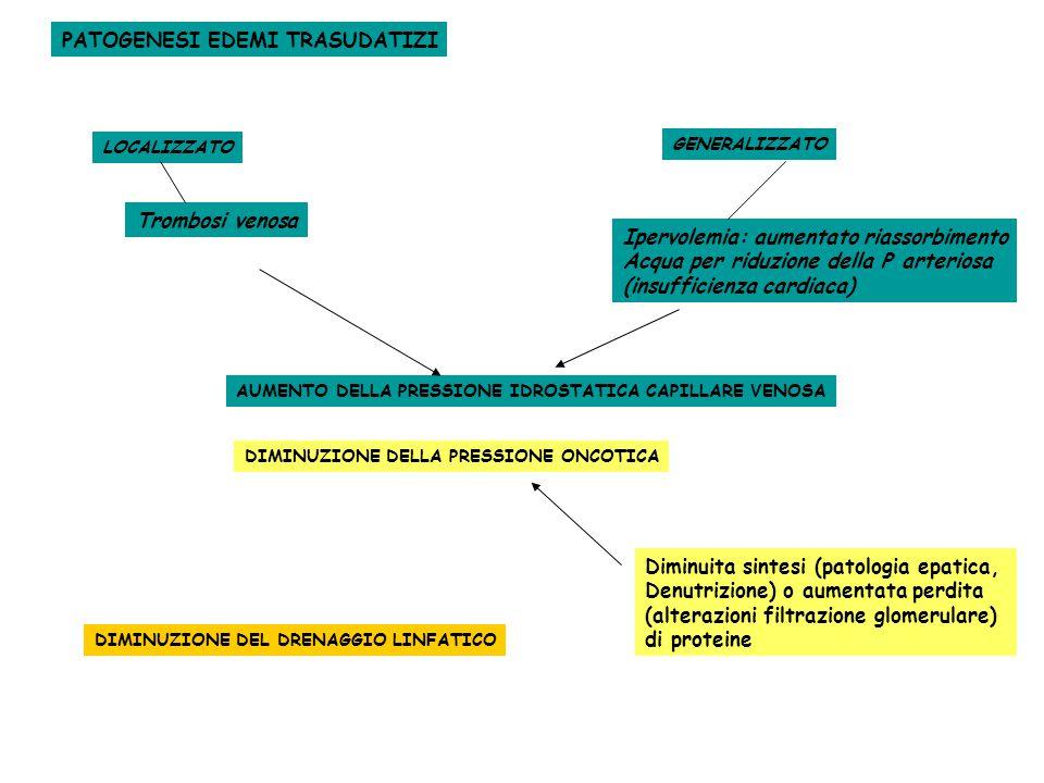 AUMENTO DELLA PRESSIONE IDROSTATICA CAPILLARE VENOSA LOCALIZZATO Trombosi venosa GENERALIZZATO Ipervolemia: aumentato riassorbimento Acqua per riduzione della P arteriosa (insufficienza cardiaca) PATOGENESI EDEMI TRASUDATIZI DIMINUZIONE DELLA PRESSIONE ONCOTICA Diminuita sintesi (patologia epatica, Denutrizione) o aumentata perdita (alterazioni filtrazione glomerulare) di proteine DIMINUZIONE DEL DRENAGGIO LINFATICO