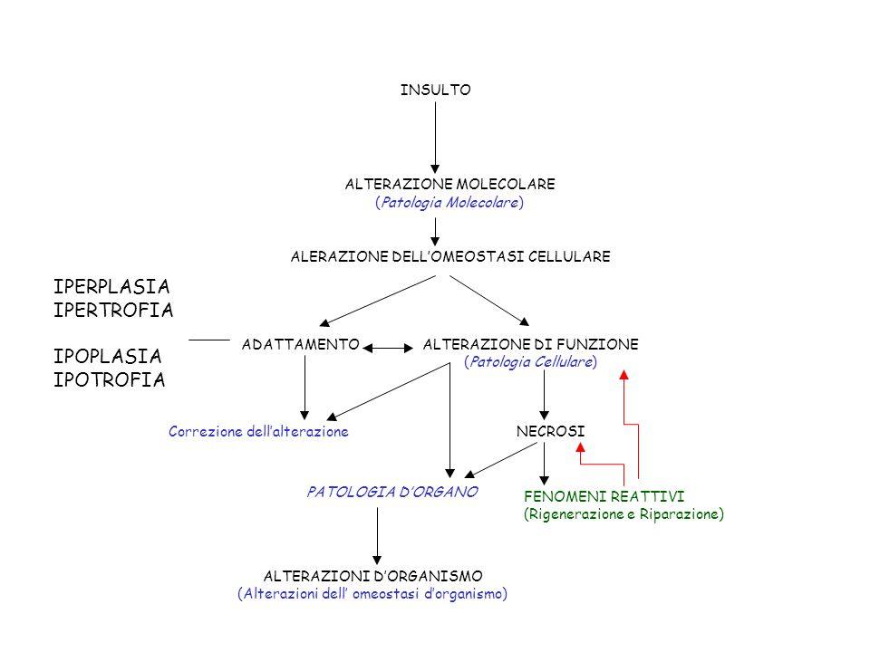 PATOLOGIA D'ORGANO INSULTO ALTERAZIONE MOLECOLARE (Patologia Molecolare) ALERAZIONE DELL'OMEOSTASI CELLULARE ADATTAMENTOALTERAZIONE DI FUNZIONE (Patologia Cellulare) Correzione dell'alterazioneNECROSI ALTERAZIONI D'ORGANISMO (Alterazionidell' omeostasid'organismo) FENOMENI REATTIVI (Rigenerazione e Riparazione) IPERPLASIA IPERTROFIA IPOPLASIA IPOTROFIA