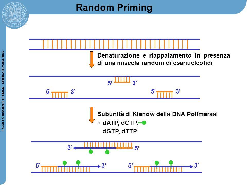 FACOLTA' DI SCIENZE FF MM NN – CHIMICA BIOANALITICA 5' 3' 5' Random Priming Denaturazione e riappaiamento in presenza di una miscela random di esanucl