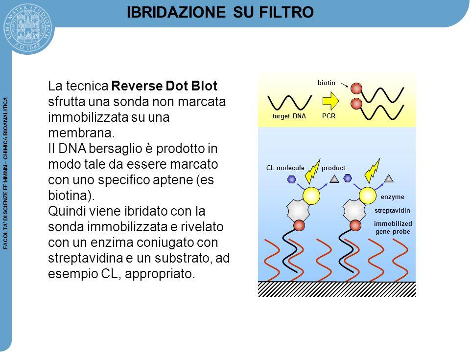FACOLTA' DI SCIENZE FF MM NN – CHIMICA BIOANALITICA La tecnica Reverse Dot Blot sfrutta una sonda non marcata immobilizzata su una membrana. Il DNA be