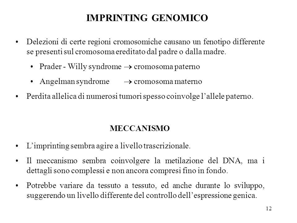 12 IMPRINTING GENOMICO Delezioni di certe regioni cromosomiche causano un fenotipo differente se presenti sul cromosoma ereditato dal padre o dalla ma