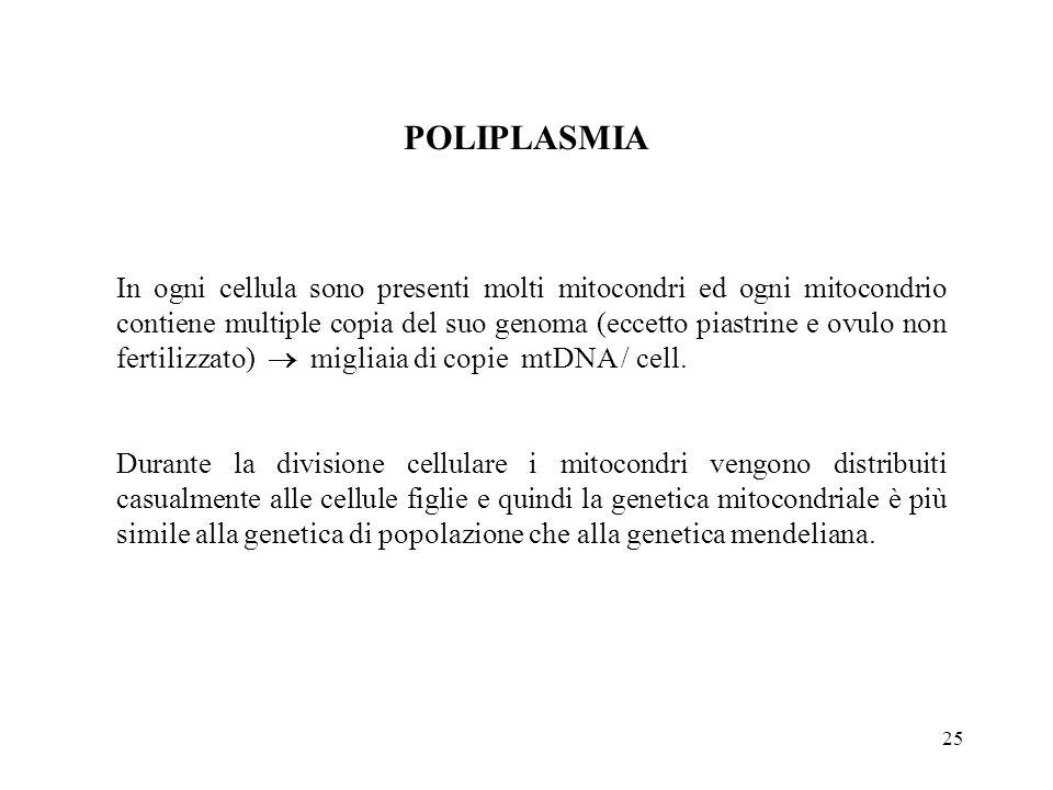 25 POLIPLASMIA In ogni cellula sono presenti molti mitocondri ed ogni mitocondrio contiene multiple copia del suo genoma (eccetto piastrine e ovulo no