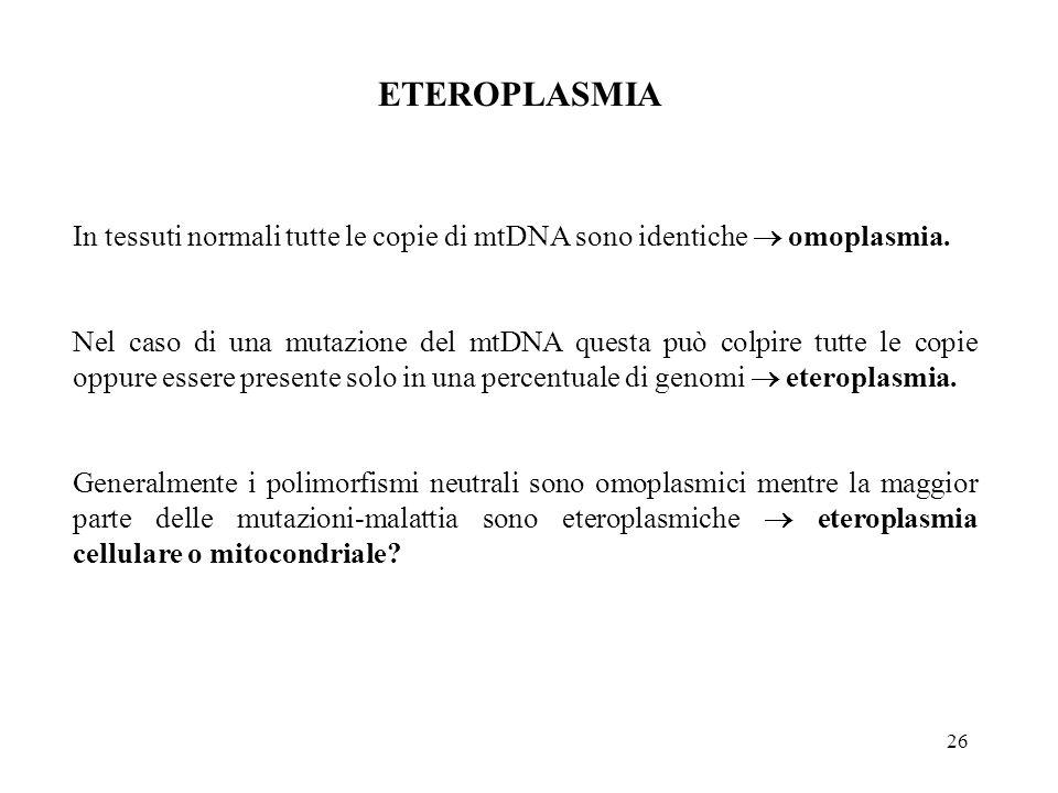 26 In tessuti normali tutte le copie di mtDNA sono identiche  omoplasmia. Nel caso di una mutazione del mtDNA questa può colpire tutte le copie oppur