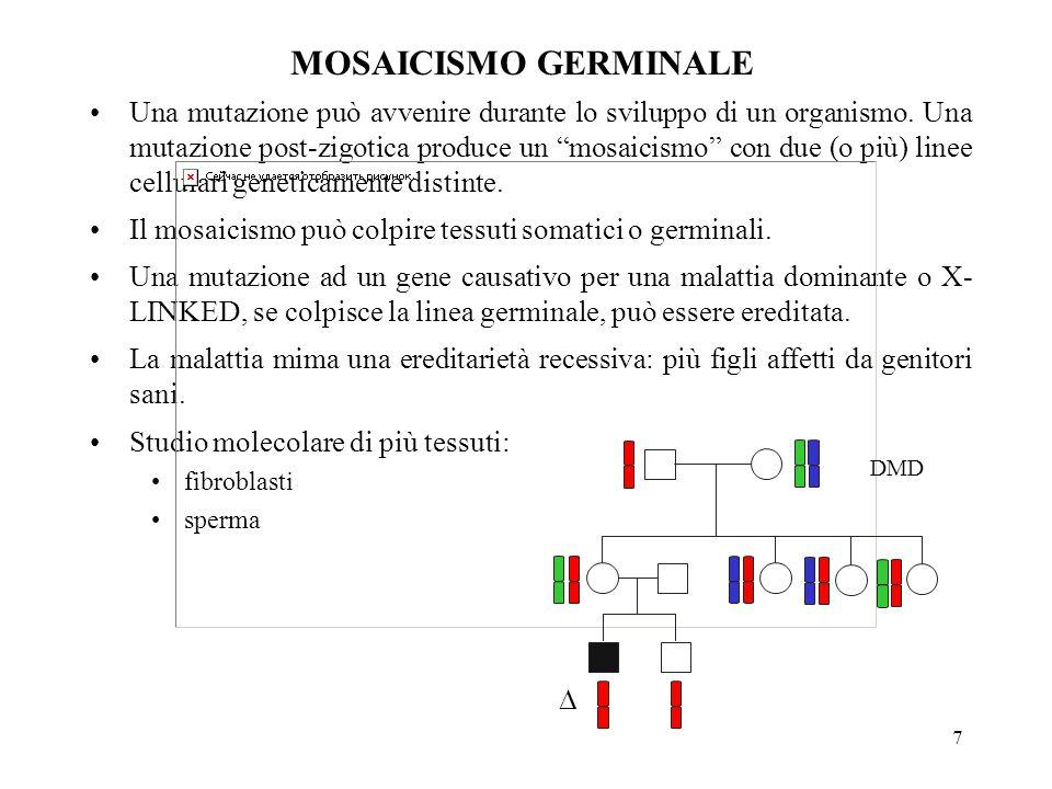 """7 MOSAICISMO GERMINALE Una mutazione può avvenire durante lo sviluppo di un organismo. Una mutazione post-zigotica produce un """"mosaicismo"""" con due (o"""