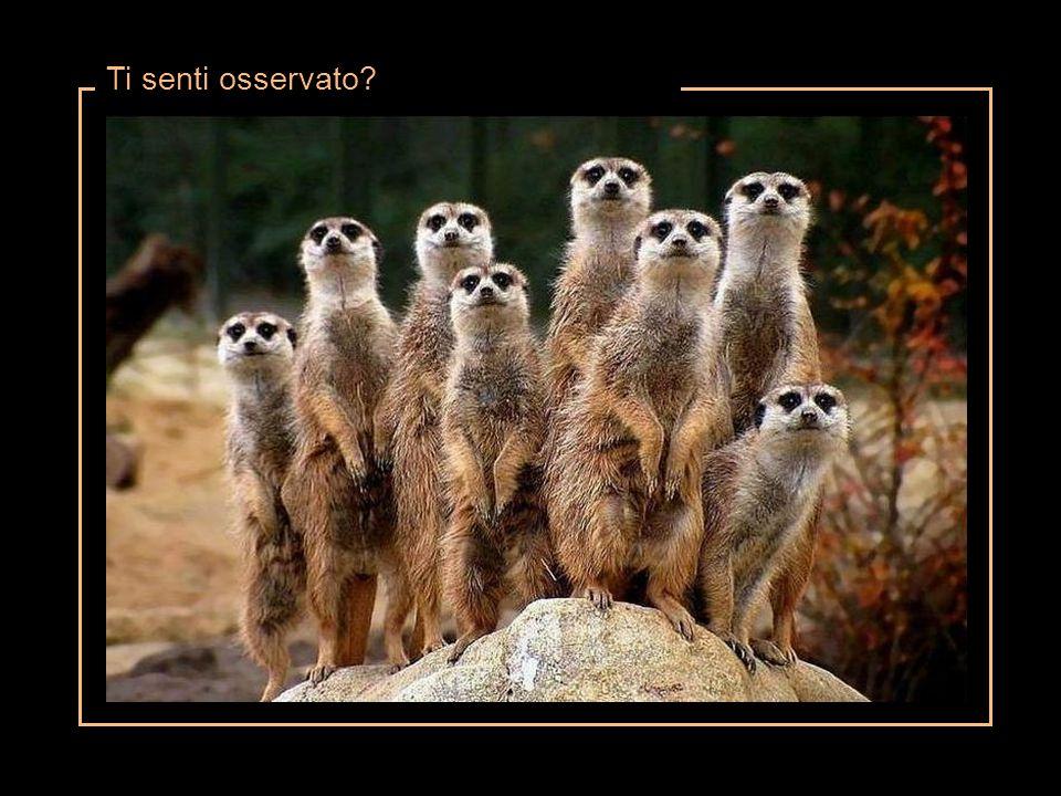 Ti senti osservato?