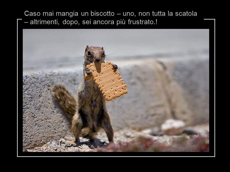 Caso mai mangia un biscotto – uno, non tutta la scatola – altrimenti, dopo, sei ancora più frustrato.!