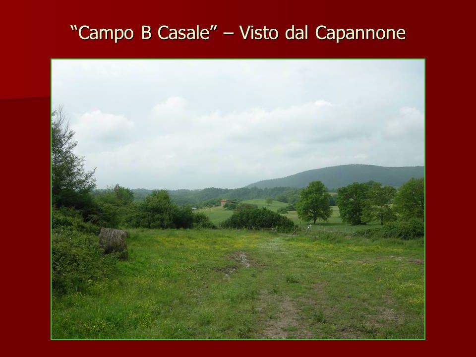 """""""Campo B Casale"""" – Visto dal Capannone"""