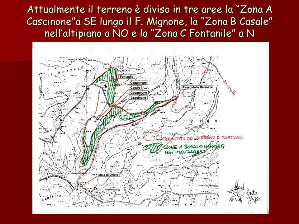 """Attualmente il terreno è diviso in tre aree la """"Zona A Cascinone""""a SE lungo il F. Mignone, la """"Zona B Casale"""" nell'altipiano a NO e la """"Zona C Fontani"""
