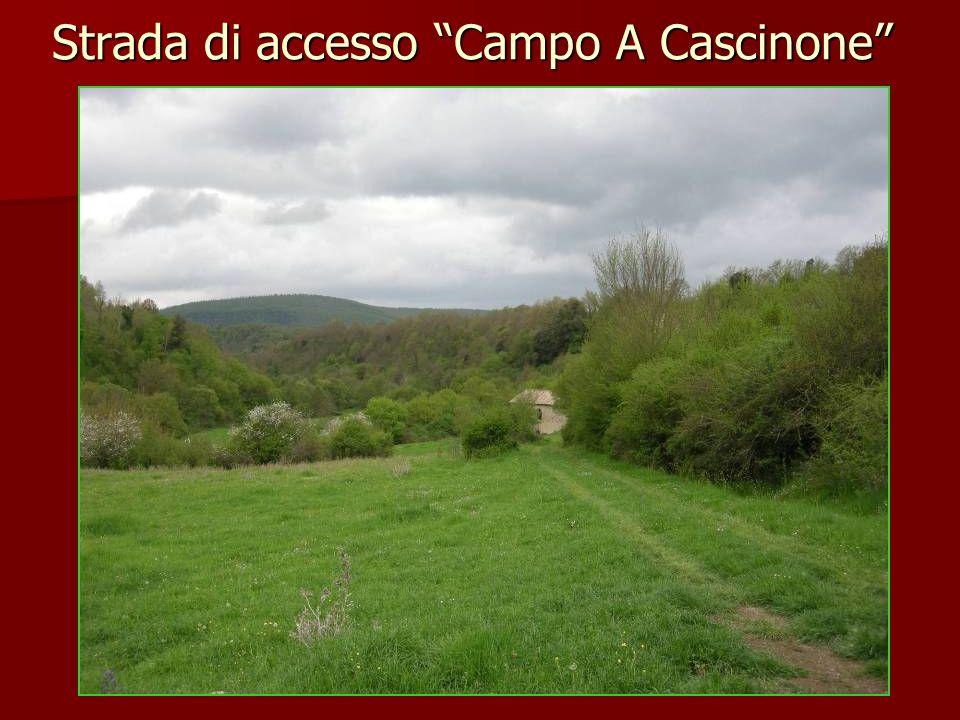 Strada di accesso Campo A Cascinone
