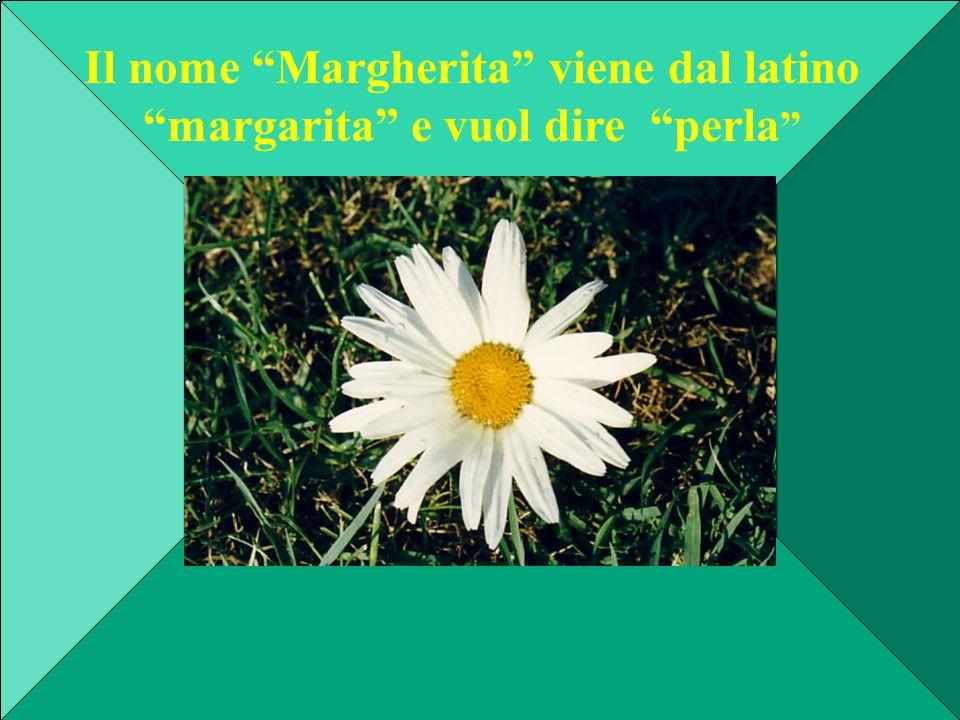 """Il nome """"Margherita"""" viene dal latino """"margarita"""" e vuol dire """"perla """""""