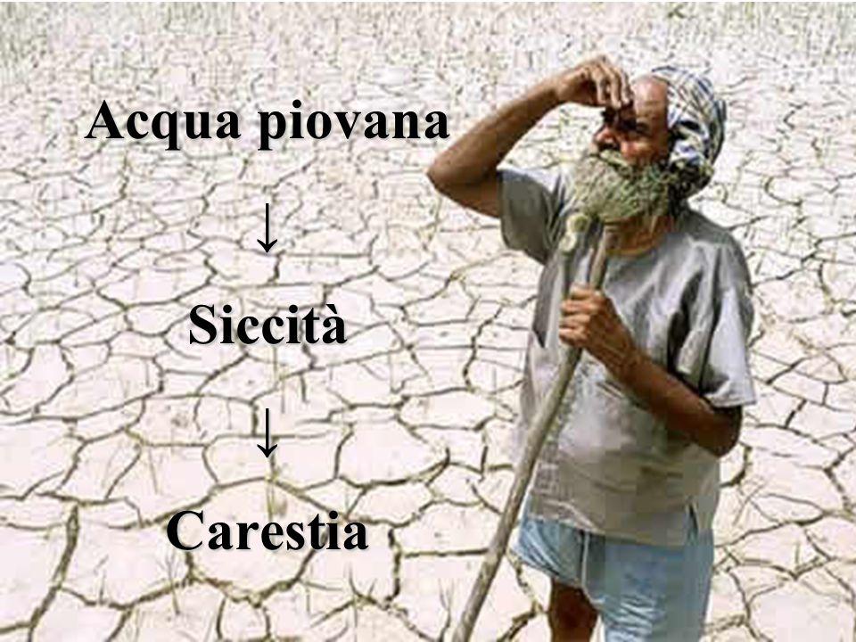Acqua piovana ↓ Siccità ↓ Carestia