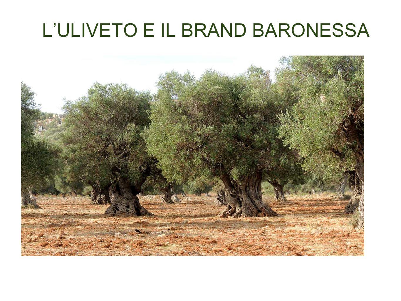 L'ULIVETO E IL BRAND BARONESSA