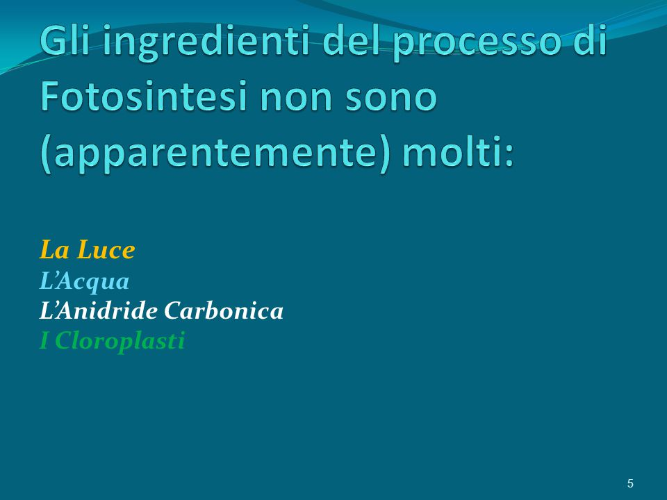 La Luce L'Acqua L'Anidride Carbonica I Cloroplasti 5