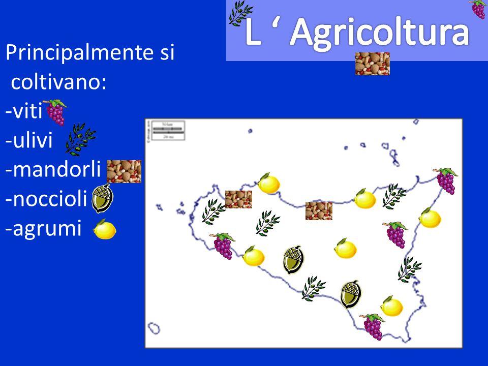 Principalmente si coltivano: -viti -ulivi -mandorli -noccioli -agrumi