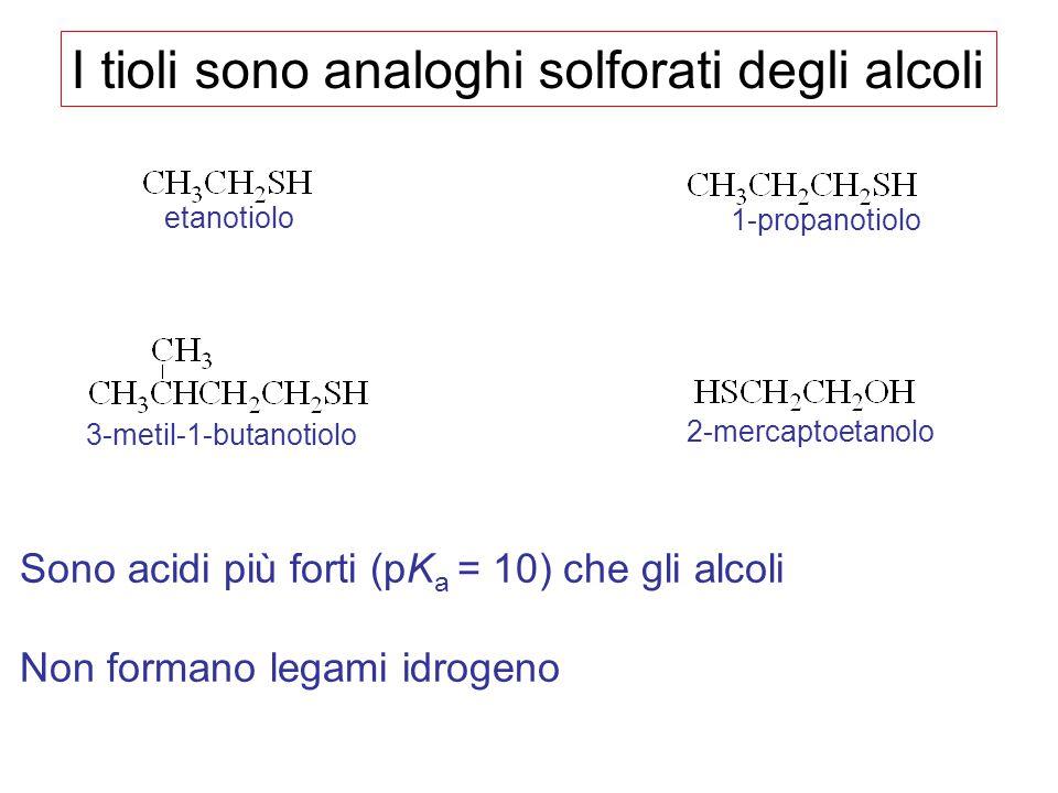 I tioli sono analoghi solforati degli alcoli Sono acidi più forti (pK a = 10) che gli alcoli Non formano legami idrogeno etanotiolo 1-propanotiolo 3-m