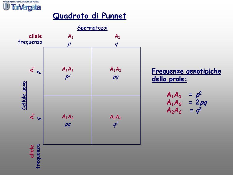 allele Spermatozoi Cellule uovo A1A1 A2A2 A1A1 A2A2 A1A1A1A1 A1A2A1A2 A1A2A1A2 A2A2A2A2 Quadrato di Punnet Frequenze genotipiche della prole: frequenz