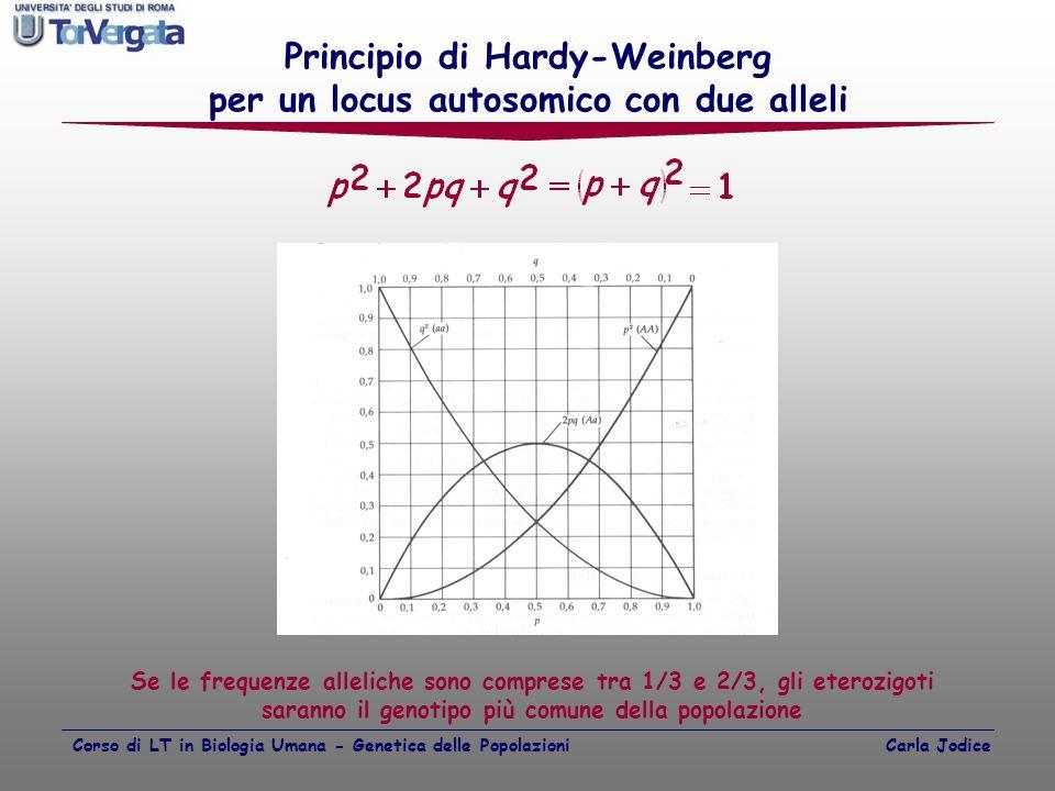 Principio di Hardy-Weinberg per un locus autosomico con due alleli Se le frequenze alleliche sono comprese tra 1/3 e 2/3, gli eterozigoti saranno il g