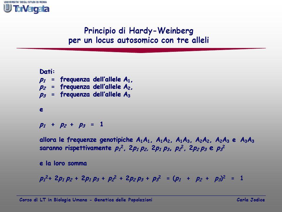 Principio di Hardy-Weinberg per un locus autosomico con tre alleli Dati: p 1 = frequenza dell'allele A 1, Dati: p 1 = frequenza dell'allele A 1, p 2 =