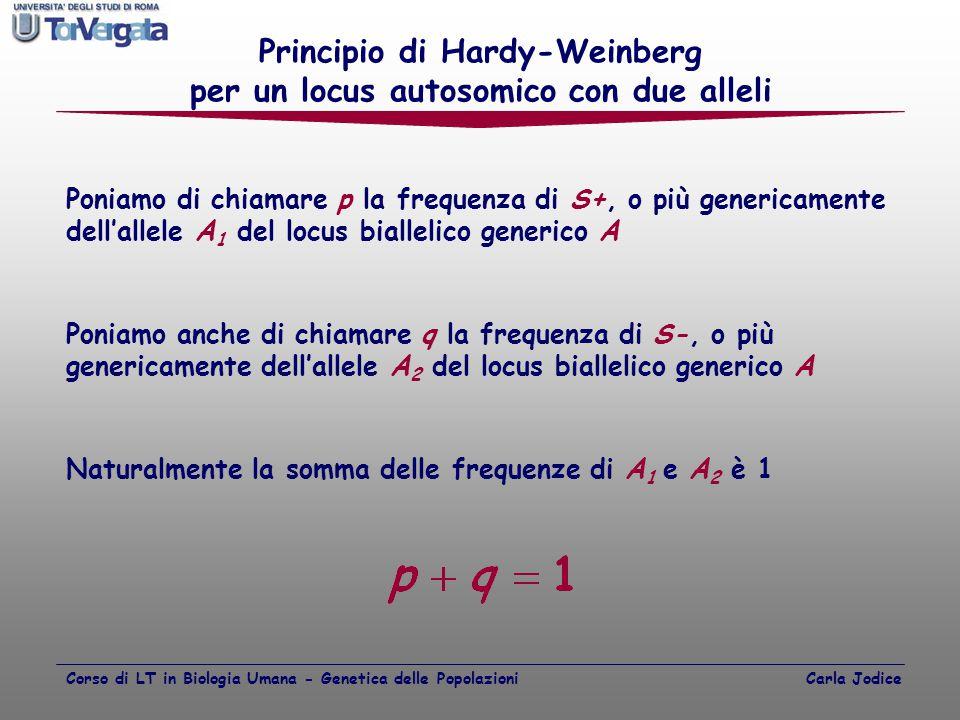 Principio di Hardy-Weinberg per un locus autosomico con due alleli Poniamo di chiamare p la frequenza di S+, o più genericamente dell'allele A 1 del l