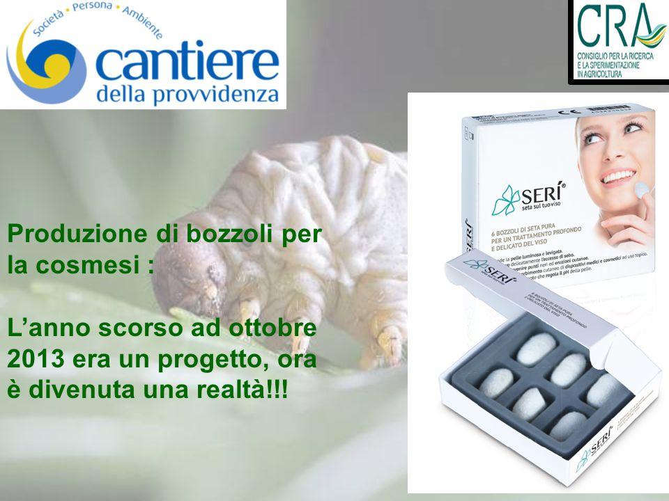 Produzione di bozzoli per la cosmesi : L'anno scorso ad ottobre 2013 era un progetto, ora è divenuta una realtà!!!