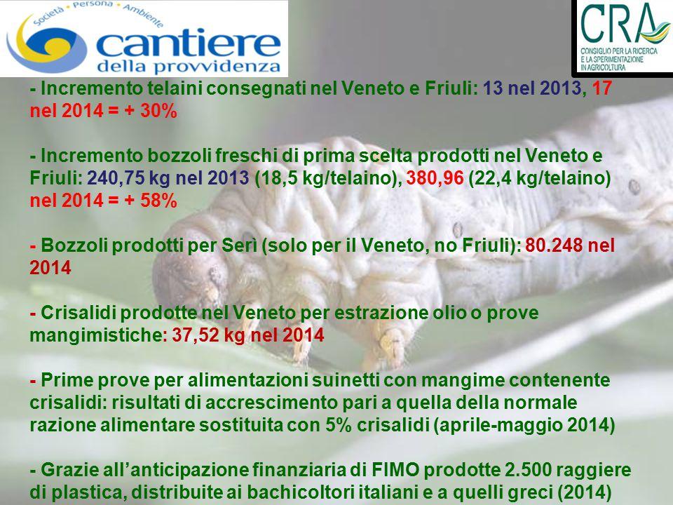- Incremento telaini consegnati nel Veneto e Friuli: 13 nel 2013, 17 nel 2014 = + 30% - Incremento bozzoli freschi di prima scelta prodotti nel Veneto