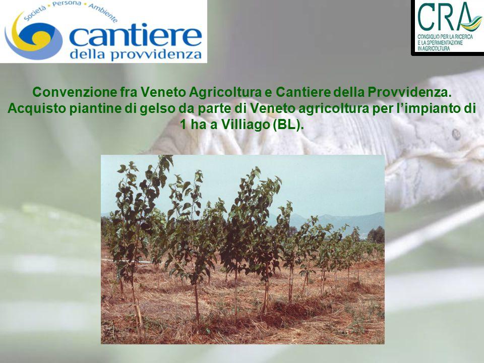Convenzione fra Veneto Agricoltura e Cantiere della Provvidenza. Acquisto piantine di gelso da parte di Veneto agricoltura per l'impianto di 1 ha a Vi