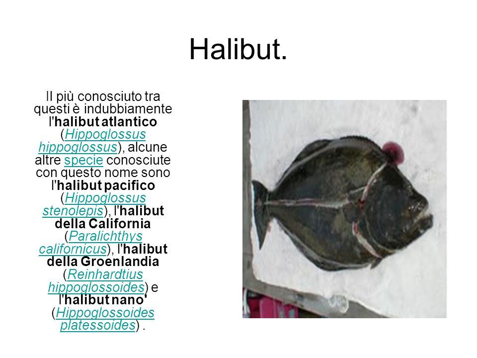 Halibut. Il più conosciuto tra questi è indubbiamente l'halibut atlantico (Hippoglossus hippoglossus), alcune altre specie conosciute con questo nome