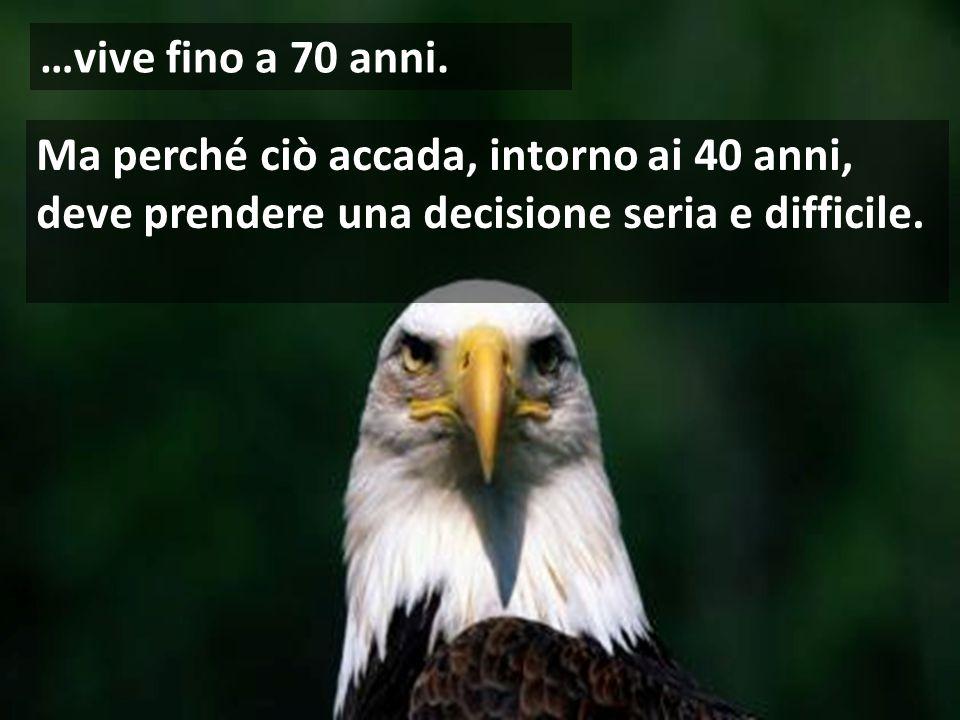 L'aquila è l'uccello che ha la maggiore longevità nella sua specie…